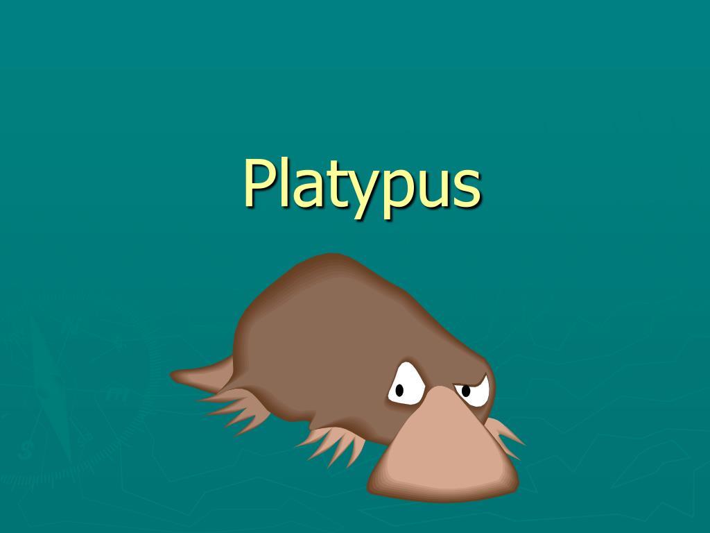 platypus l.