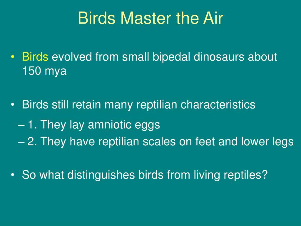 Birds Master the Air
