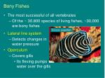 bony fishes9