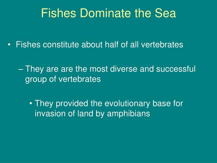 Fishes dominate the sea