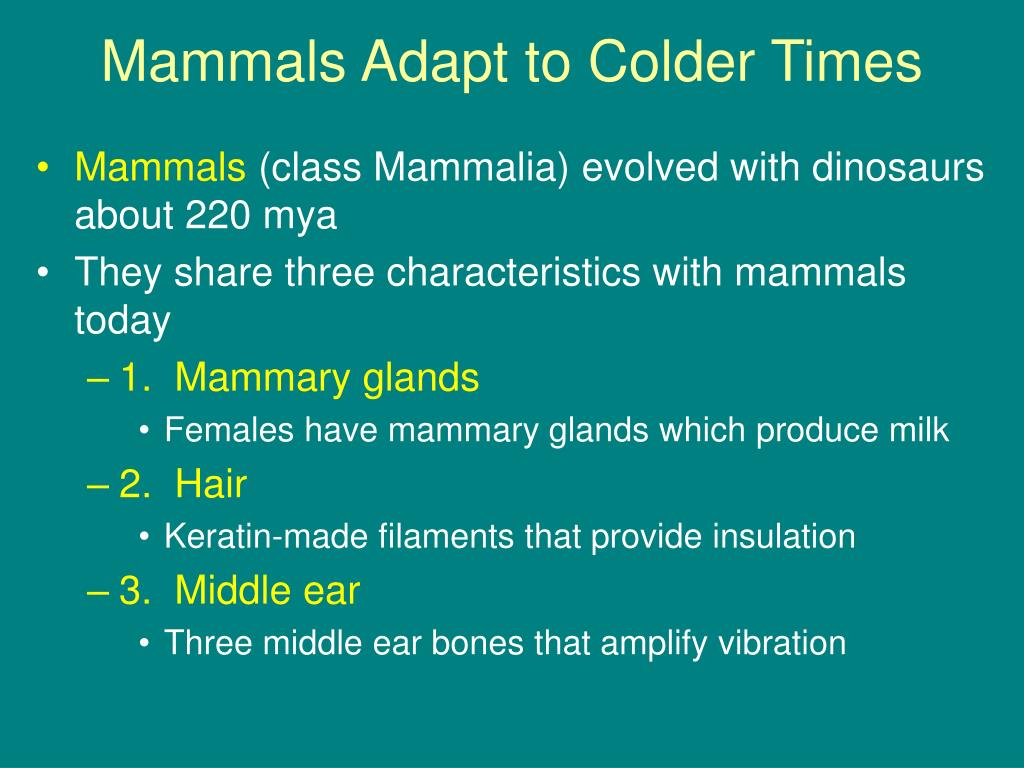 Mammals Adapt to Colder Times