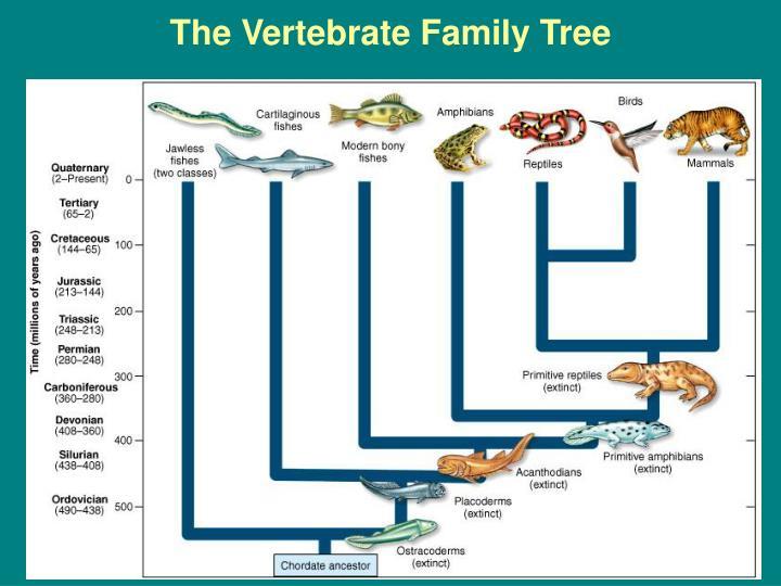The Vertebrate Family Tree