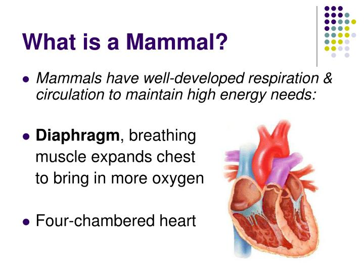 What is a mammal3