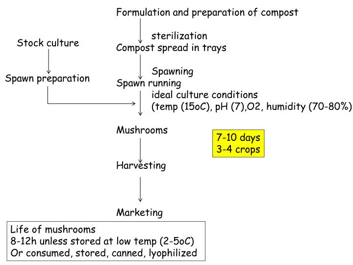 Formulation and preparation of compost