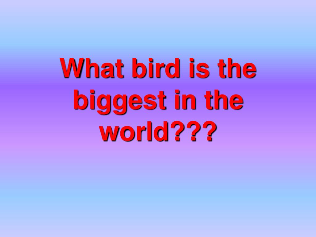 What bird is the biggest in the world???