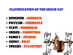 classification of the house cat