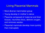 living placental mammals