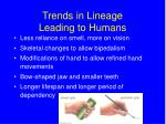 trends in lineage leading to humans