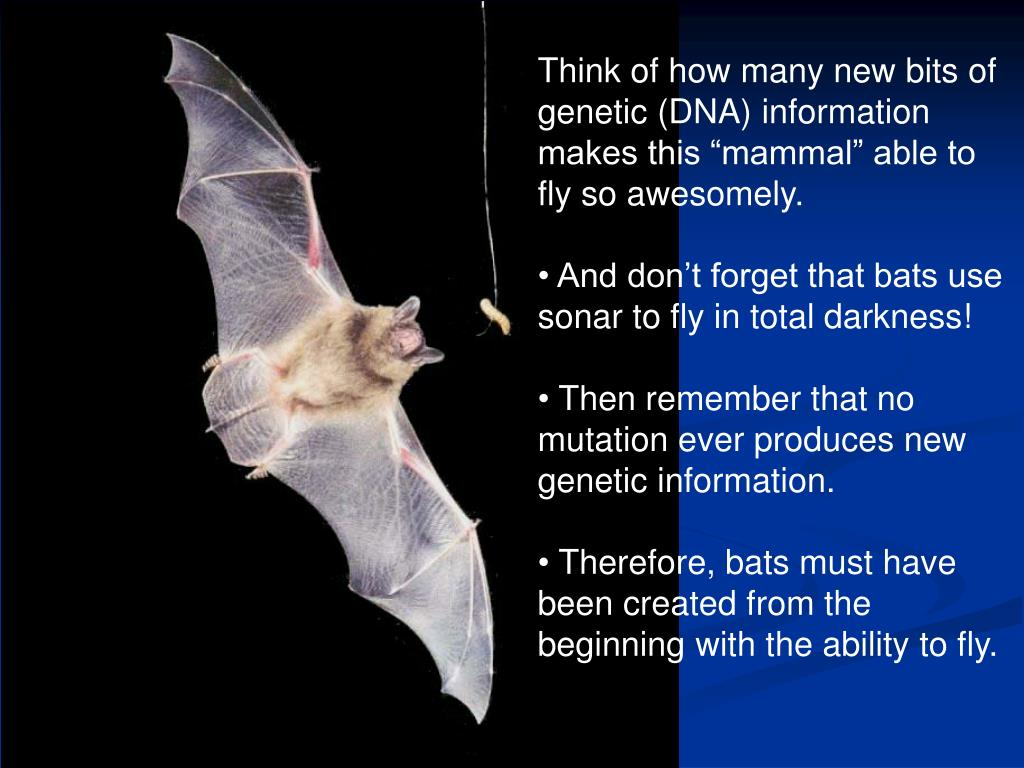 "Think of how many new bits of genetic (DNA) information makes this ""mammal"" able to fly so awesomely."