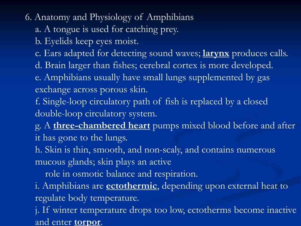 6. Anatomy and Physiology of Amphibians