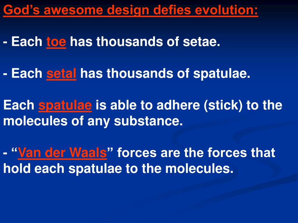 God's awesome design defies evolution: