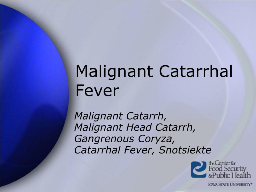 malignant catarrhal fever l.