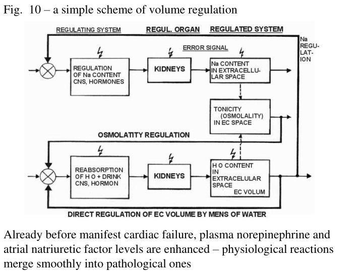 Fig.  10 – a simple scheme of volume regulation