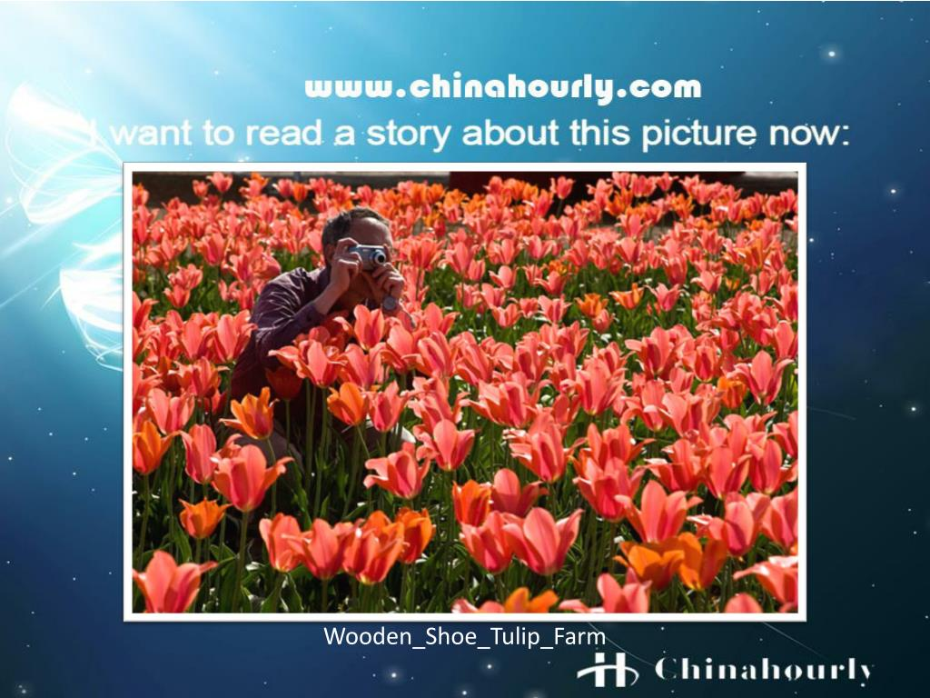 Wooden_Shoe_Tulip_Farm