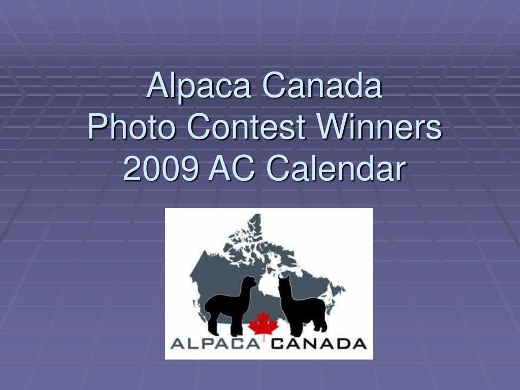 alpaca canada photo contest winners 2009 ac calendar l.