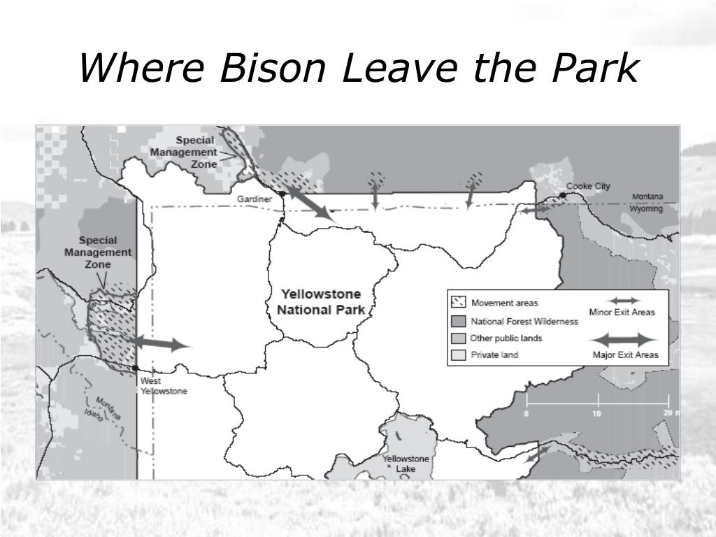 Where Bison Leave the Park