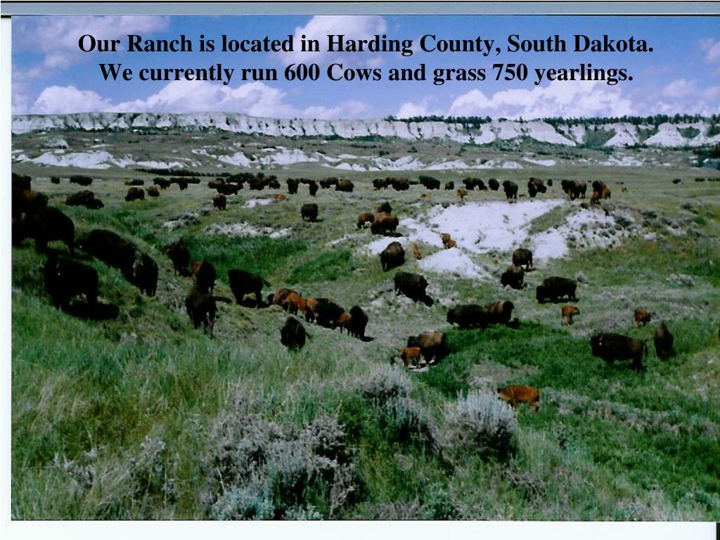 Our Ranch is located in Harding County, South Dakota. We currently run 600 Cows and grass 750 yearlings.