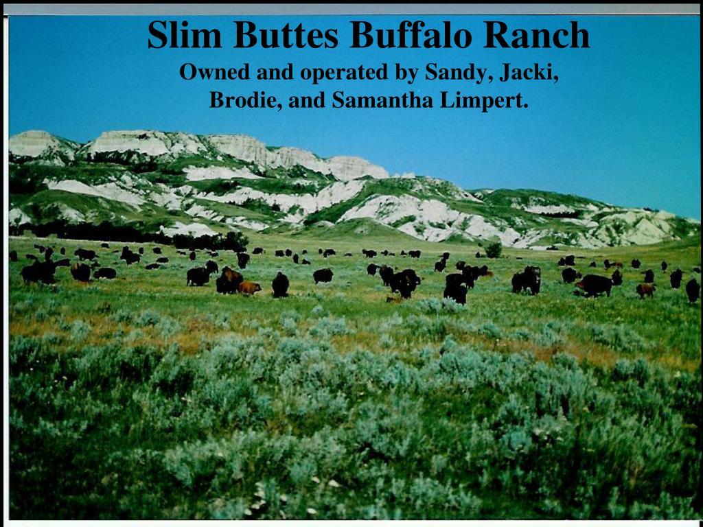 Slim Buttes Buffalo Ranch
