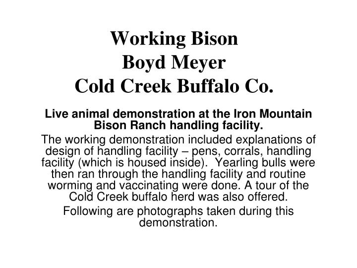 Working bison boyd meyer cold creek buffalo co