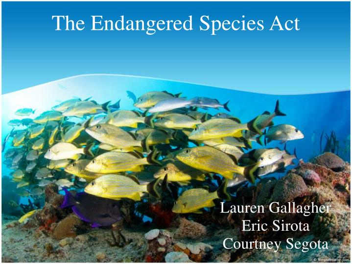 the endangered species act n.