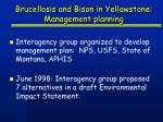 brucellosis and bison in yellowstone management planning