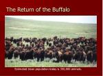 the return of the buffalo