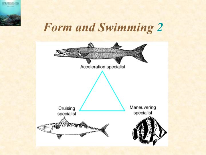 Form and Swimming