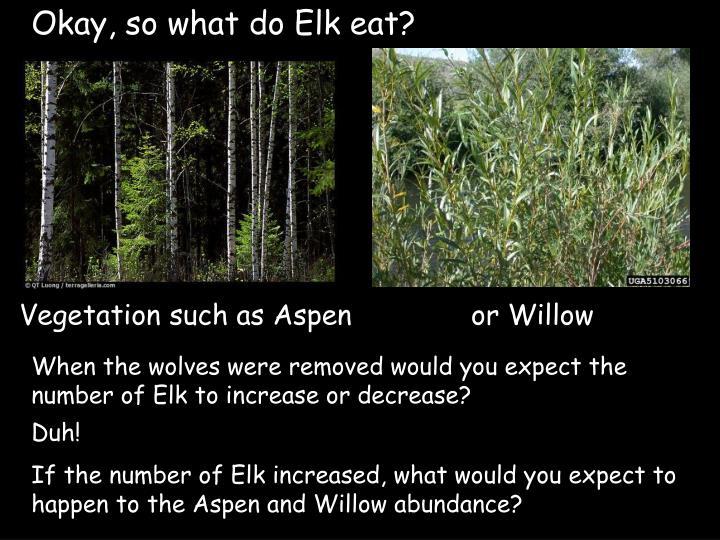Okay, so what do Elk eat?