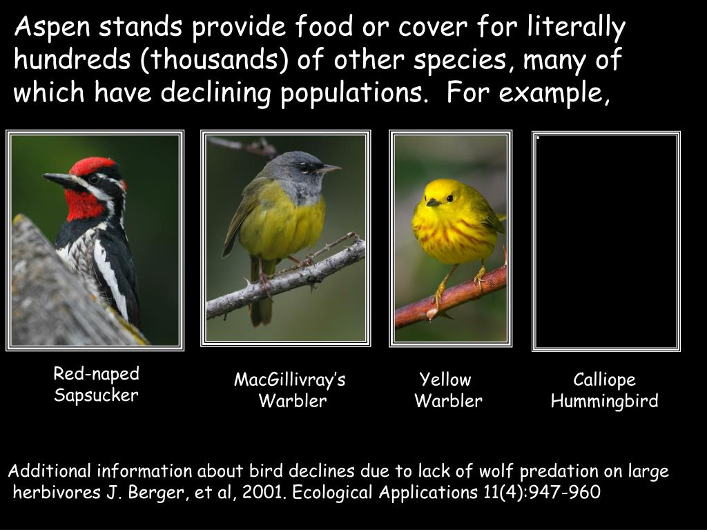 Aspen stands provide food or cover for literally hundreds (thousands) of other species, many of which have declining populations.  For example,