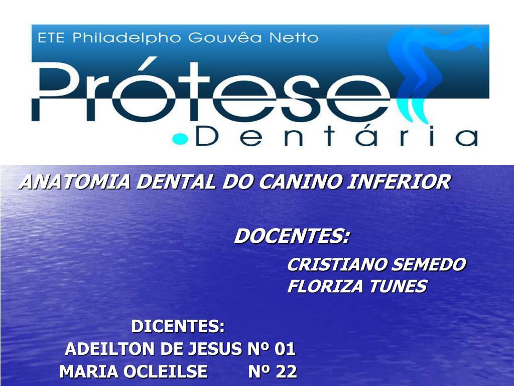 PPT - ANATOMIA DENTAL DO CANINO INFERIOR DOCENTES: CRISTIANO SEMEDO ...