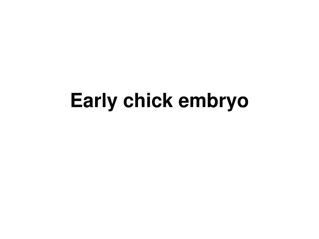 PPT - Early chick embryo PowerPoint Presentation - ID:1050167