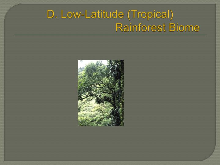 the features of the tropical rainforest biome