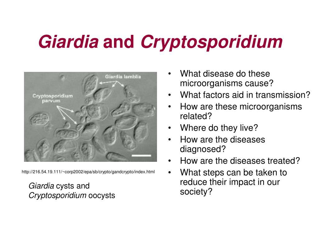 giardia and cryptosporidium cysts)