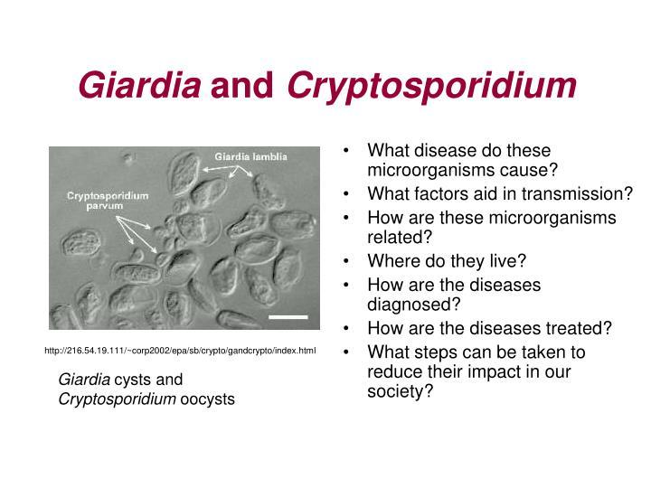 cryptosporidium and giardia parasites)