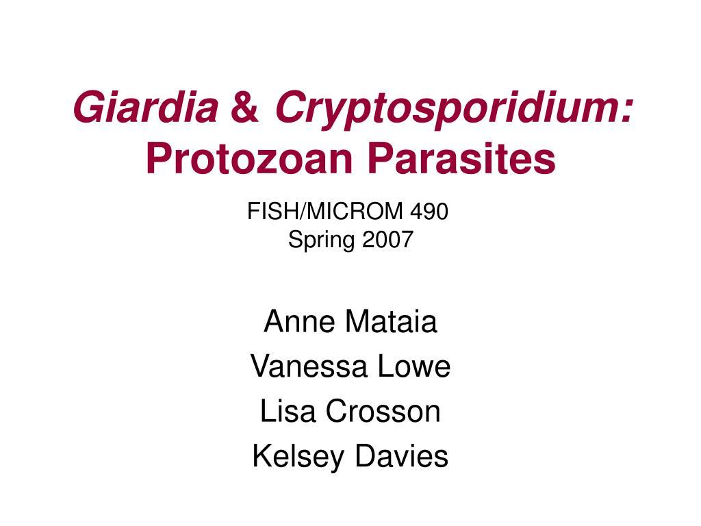 giardia cryptosporidium protozoan parasites l.