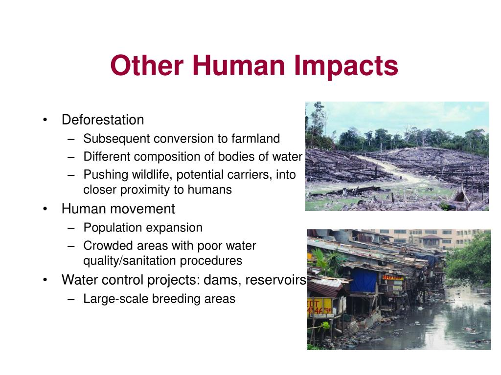 Other Human Impacts