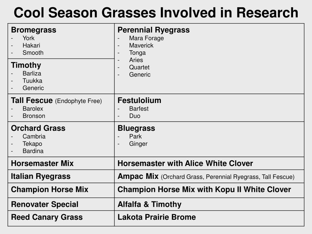 Cool Season Grasses Involved in Research