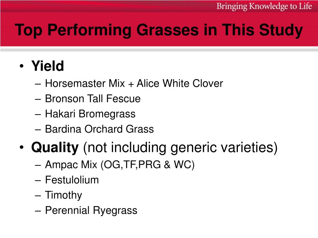 Top Performing Grasses in This Study