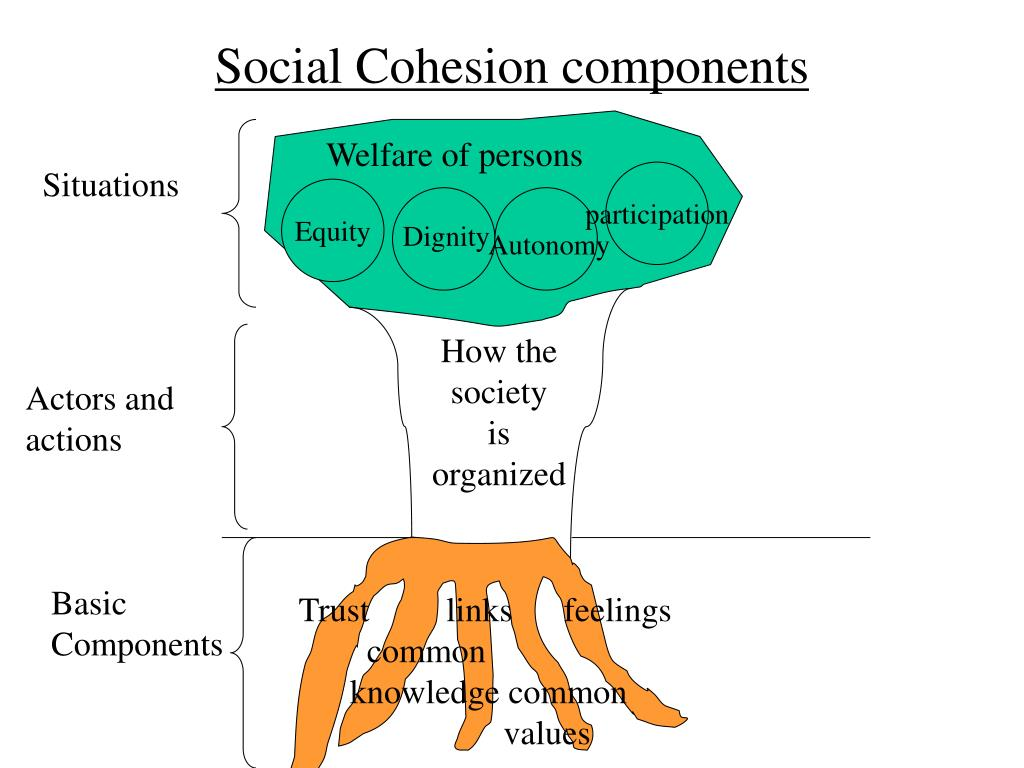Social Cohesion components
