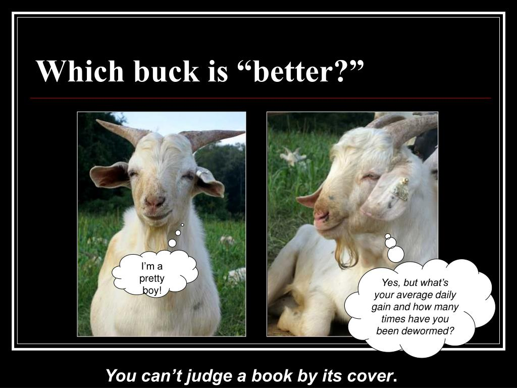 """Which buck is """"better?"""""""