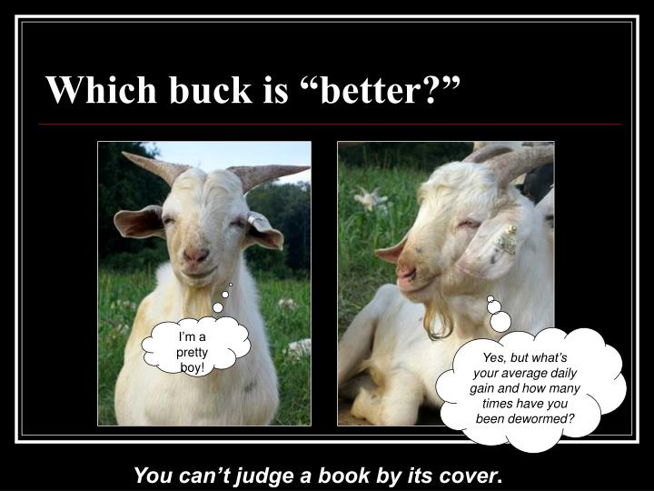 Which buck is better
