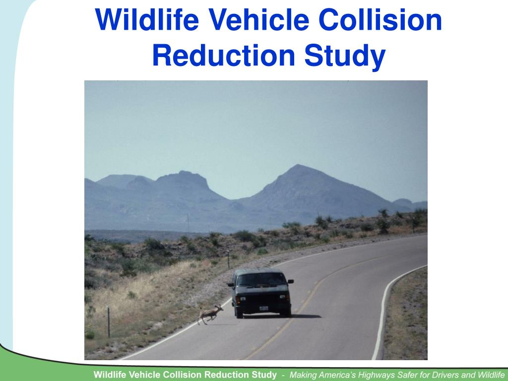 wildlife vehicle collision reduction study l.