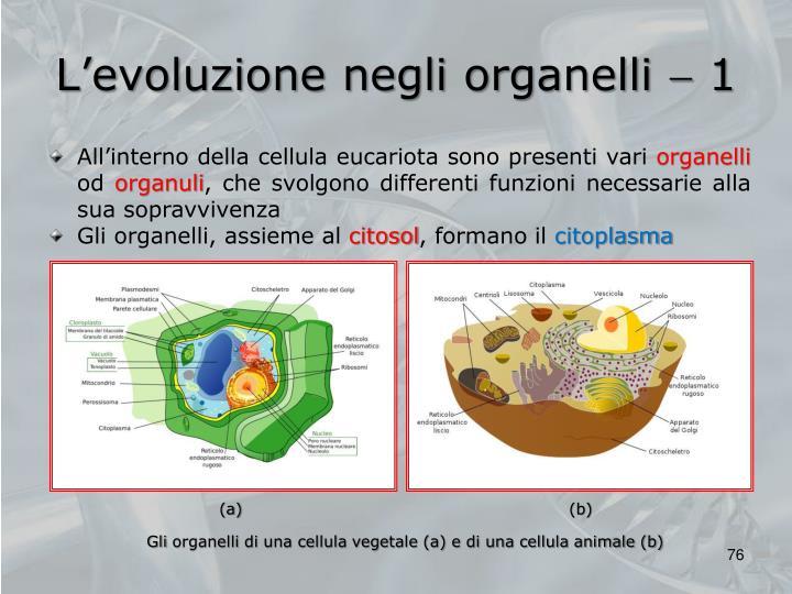 L'evoluzione negli