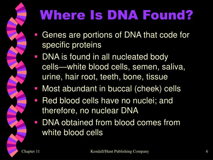 Where Is DNA Found?