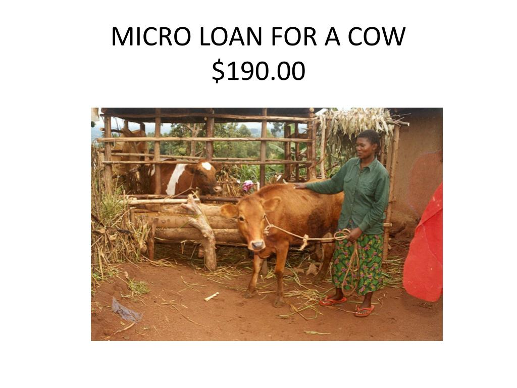 MICRO LOAN FOR A COW