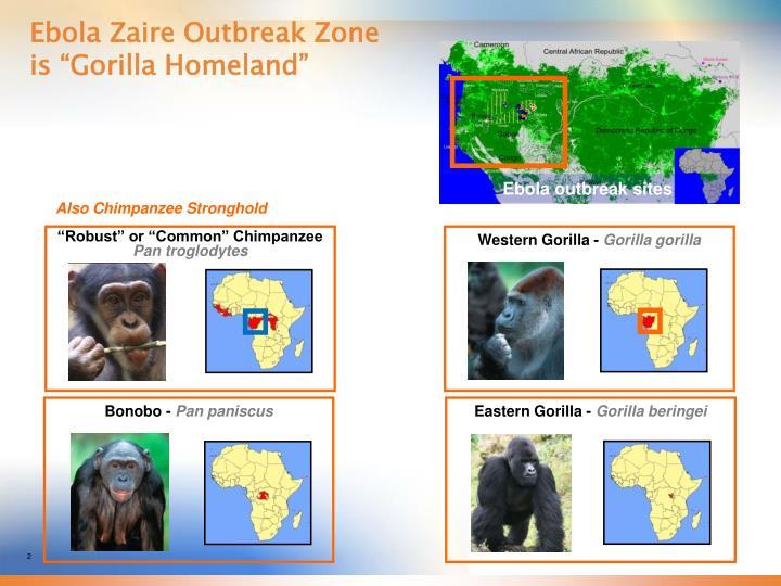 Ebola zaire outbreak zone is gorilla homeland