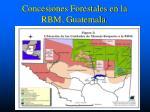 concesiones forestales en la rbm guatemala
