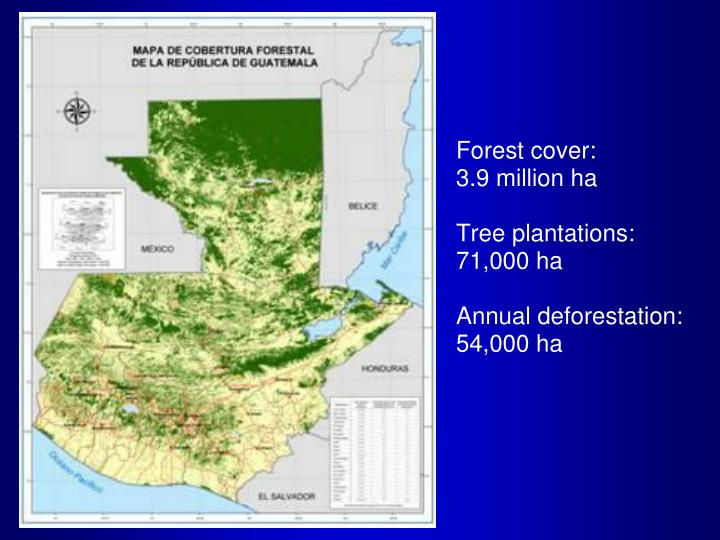 Forest certification in guatemala