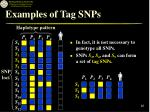 examples of tag snps26