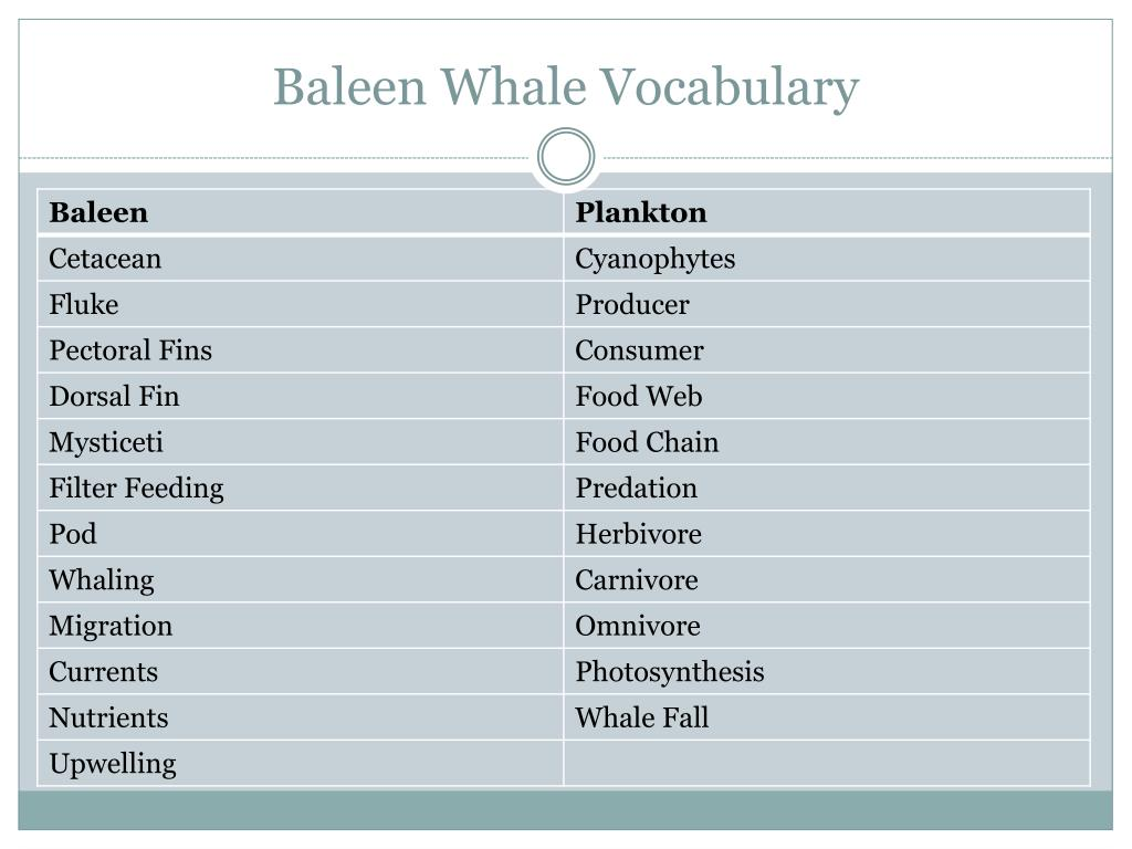 baleen whale vocabulary l.